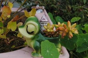 Mr Gnome & Mr Frog
