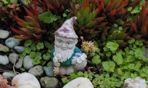 Mr Gnome in garden 2