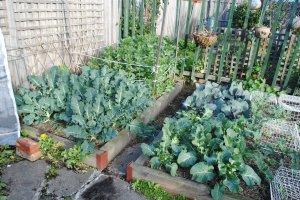 Broccoli, cauliflower, cabbage, kale