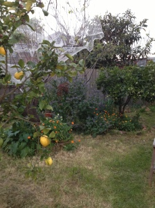 ORCHARD 2012