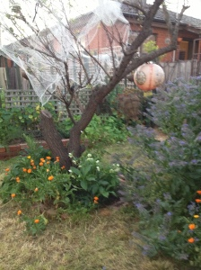 Orchard AFTER