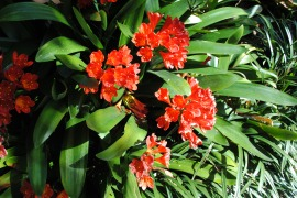 Red Bromeliads