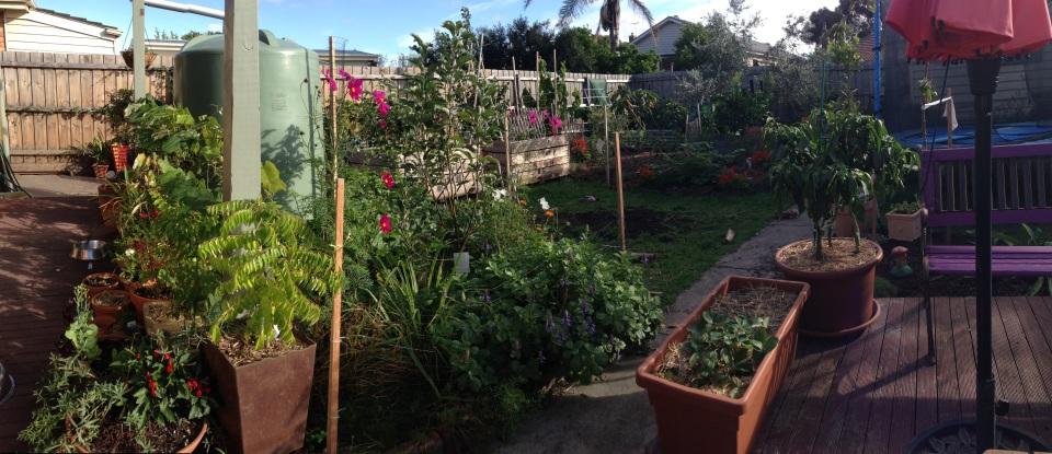 Russell & Lisa's Urban Garden