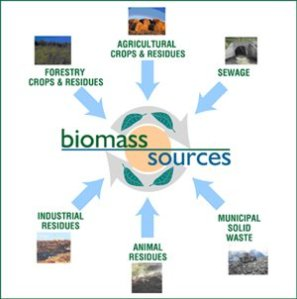 _0_a_bioenergy_biomass_sources
