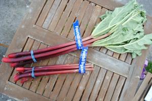 Foothills Organics Rhubarb