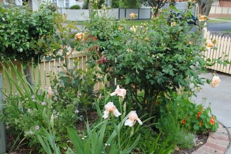 Lisa's fron garden 2