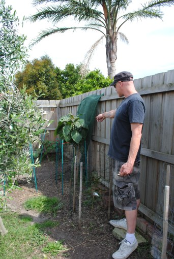 Russell and tamarillo