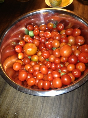Bowl of tomatoes 2012