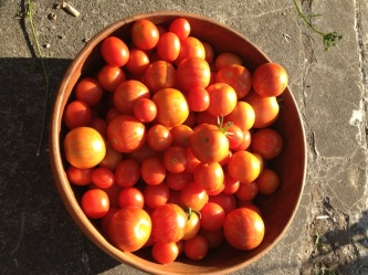 Bowl of tomatoes 3