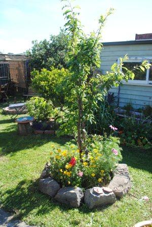 Plum tree pond Oct 13