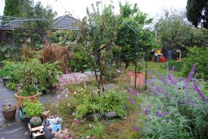 Soggy garden 'Autumn'