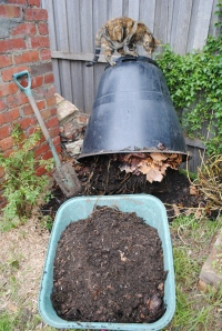 Digging out the compost